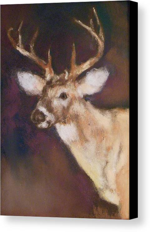 White Tail Deer Canvas Print featuring the painting White Tail Buck by Debbie Anderson