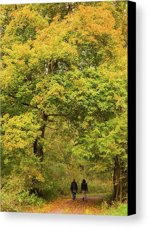 Fall Canvas Print featuring the photograph Yellow Trees In Fall by Matthias Hauser