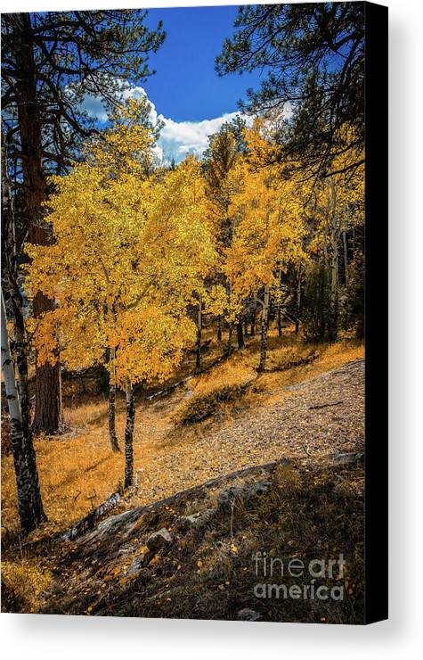 Jon Burch Canvas Print featuring the photograph Yellow Trees by Jon Burch Photography