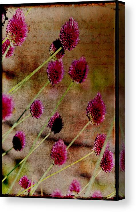 Pink Canvas Print featuring the photograph Antique Style Pink Floral by P S