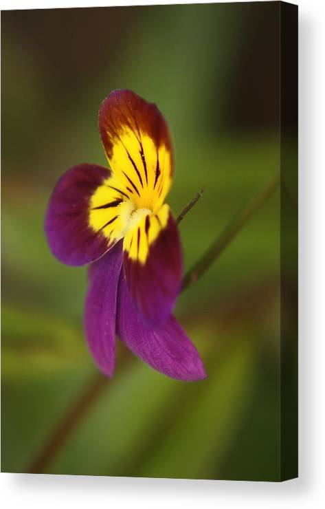 Nature Canvas Print featuring the photograph Fl.purple1 by Theresa Heald