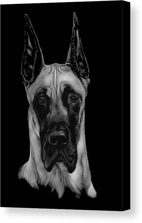 Great Dane Canvas Print featuring the drawing Great Dane by Rachel Hames