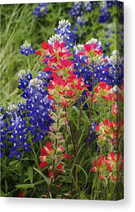 Wildflowers Canvas Print featuring the photograph Hill Country Bloom by Rebecca Bayer