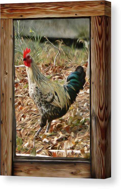 Studio Window Rooster Canvas Print featuring the photograph Studio Window Rooster by Barbara St Jean