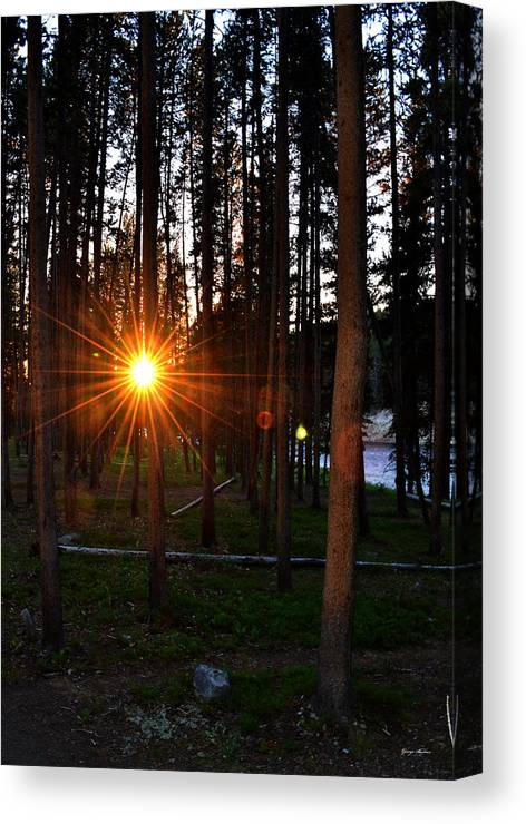 Trees Canvas Print featuring the photograph Yellowstone - Sunset Through The Trees by George Bostian