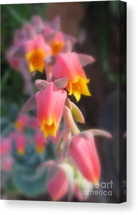 Flower Canvas Print featuring the photograph Compelled by Tina Marie