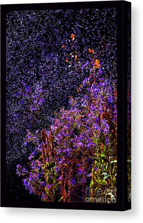 Asters In Rain Canvas Print featuring the photograph Galactic Gardens by Susanne Still