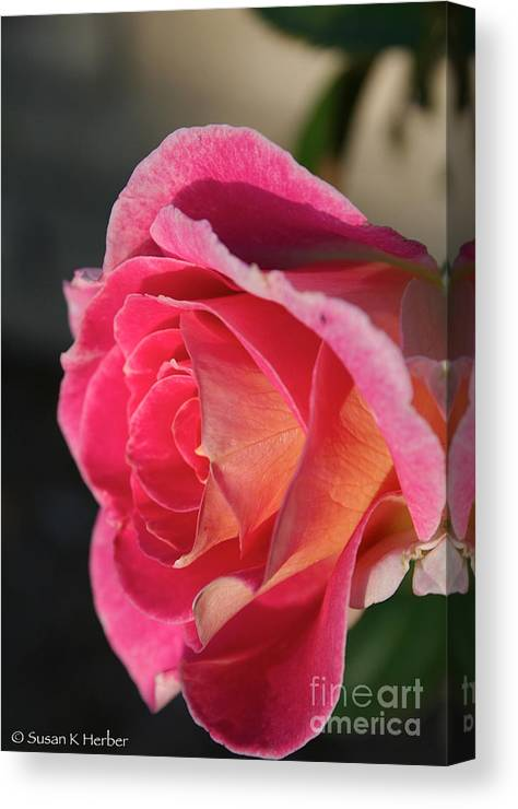Flower Canvas Print featuring the photograph Greet The Sun by Susan Herber