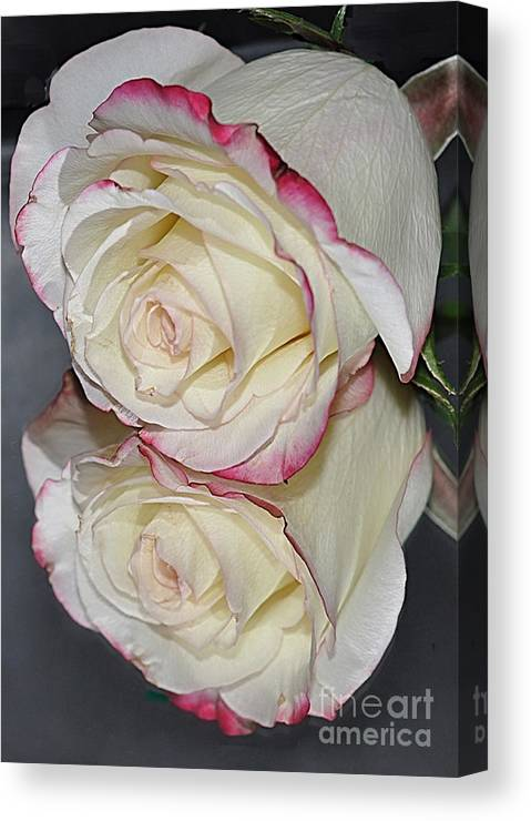 Rose. Reflection Canvas Print featuring the photograph Rose Reflection by Marianne Troia