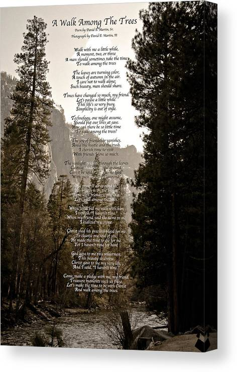 Photography Canvas Print featuring the photograph A Walk Among The Trees by David Martin