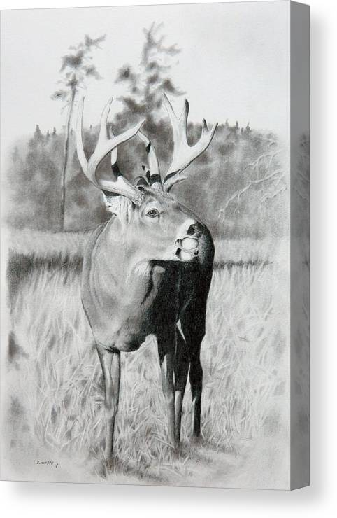 Animal Canvas Print featuring the drawing Apple Snack by Stan White
