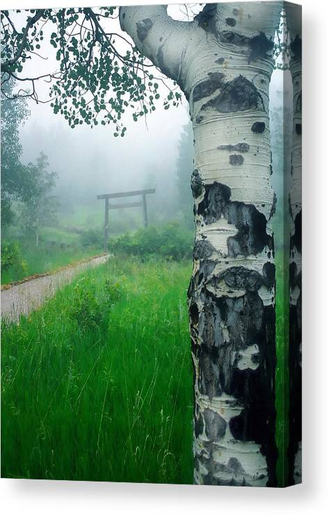 Aspen Canvas Print featuring the photograph Aspen Gate Mist by Karl Manteuffel