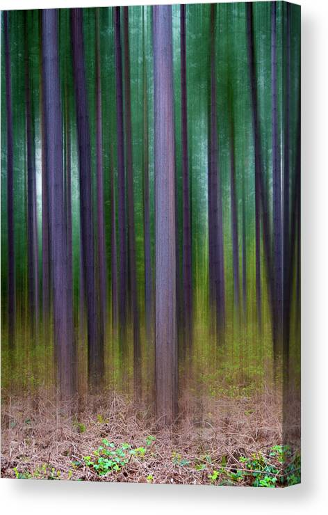 Forest Canvas Print featuring the photograph Forest Abstract02 by Svetlana Sewell
