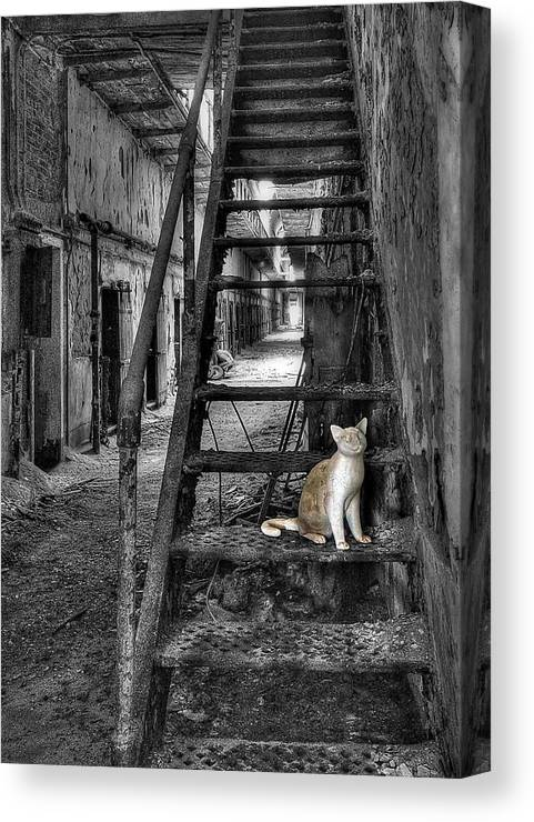 Abandoned Canvas Print featuring the photograph Here Kitty Kitty Kitty... by Evelina Kremsdorf