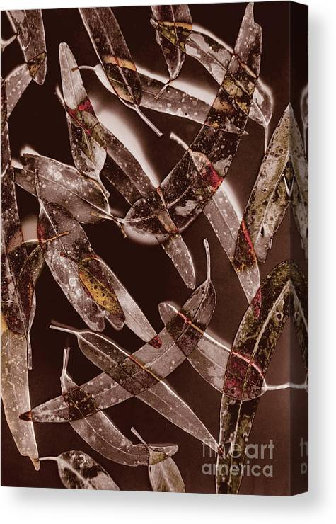 Leaf Canvas Print featuring the photograph Nature In Design by Jorgo Photography - Wall Art Gallery