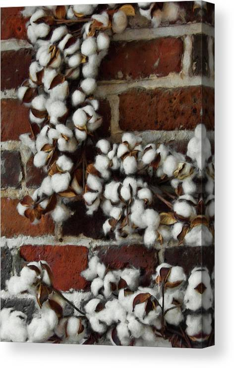 Cotton Canvas Print featuring the photograph Raw Cotton by JAMART Photography