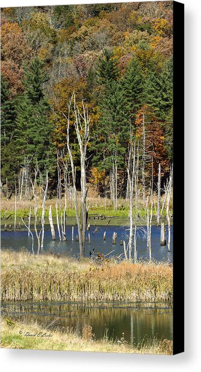 David E Lester Canvas Print featuring the photograph Kimsey Lake by David Lester