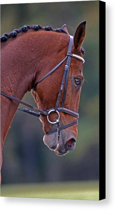Horse Canvas Print featuring the photograph Chestnut by Skip Willits