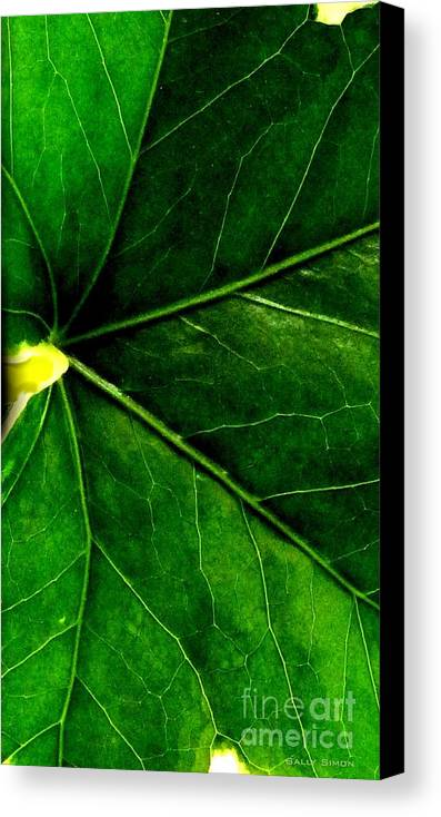 Pictures Of Leaves Canvas Print featuring the photograph In The Viens by Sally Simon