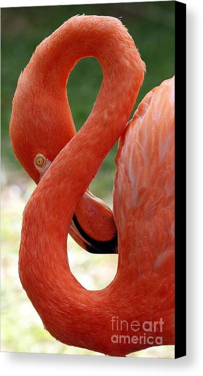 Flamingo Canvas Print featuring the photograph Flamingo Eight by Beth Phifer
