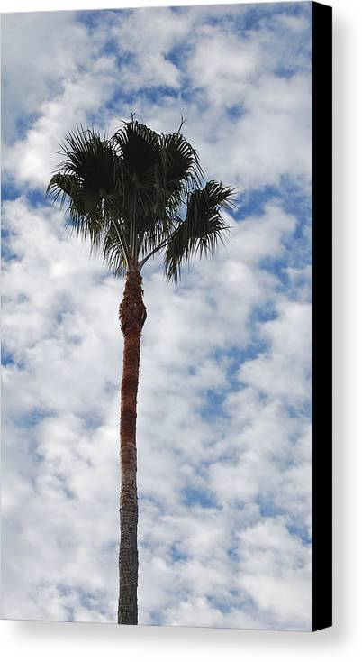 Sky Canvas Print featuring the photograph Palm And Clouds by Jean Booth