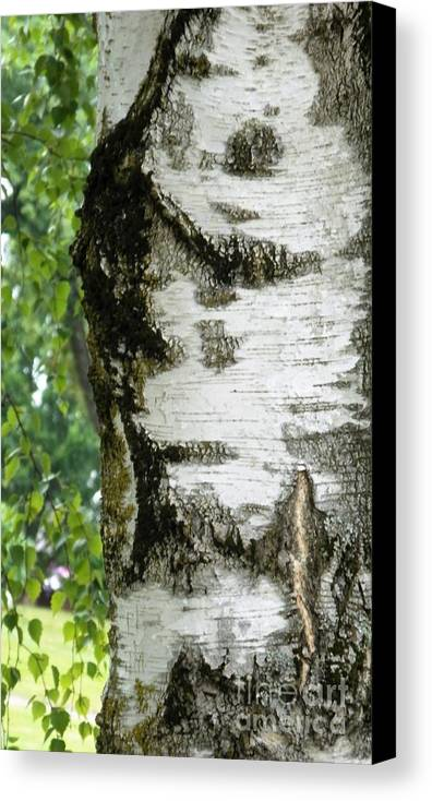 Patterns Canvas Print featuring the photograph Plentiful Patterns by L Cecka