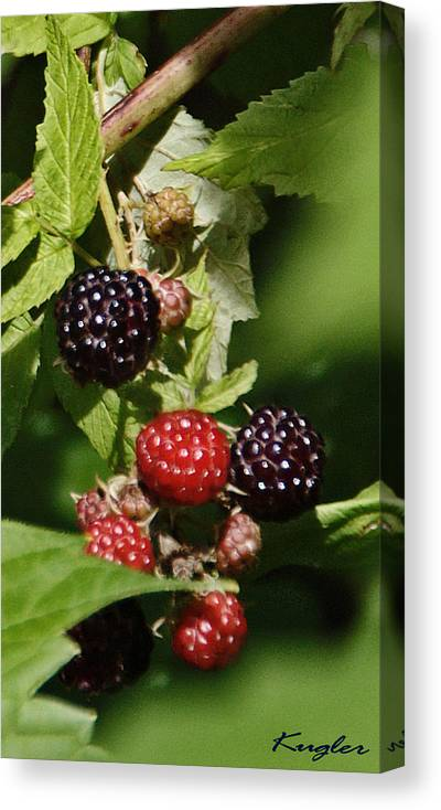 Berries Canvas Print featuring the photograph the Berries by Chuck Kugler