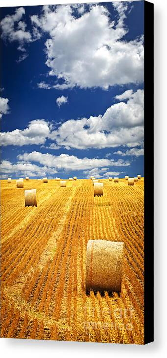 Agriculture Canvas Print featuring the photograph Farm Field With Hay Bales In Saskatchewan by Elena Elisseeva