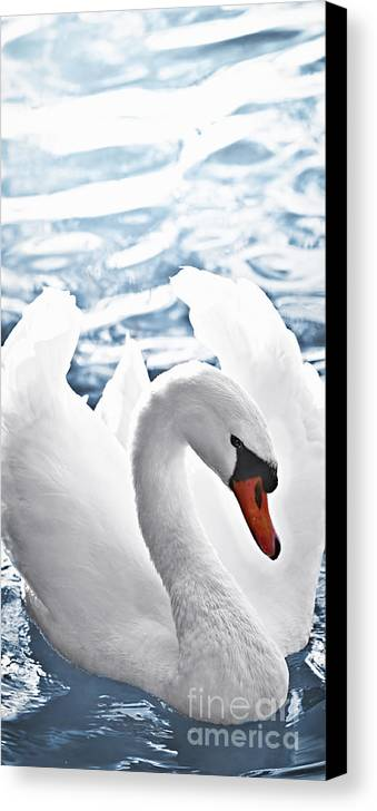 Swan Canvas Print featuring the photograph White Swan On Water by Elena Elisseeva