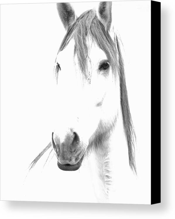 Horse Canvas Print featuring the photograph Gracie by Lynda Dawson-Youngclaus