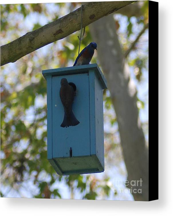 Nature Canvas Print featuring the pyrography Bluebird House by Barry Kadische