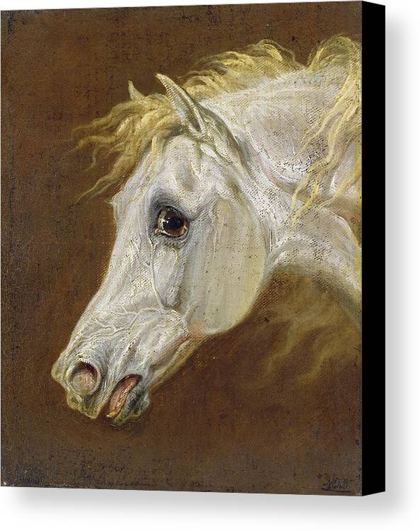 Head Canvas Print featuring the painting Head Of A Grey Arabian Horse by Martin Theodore Ward
