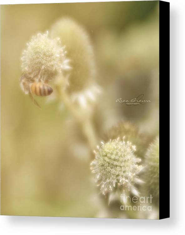 Honeybee Canvas Print featuring the photograph It's Been A While by Rrea Brown