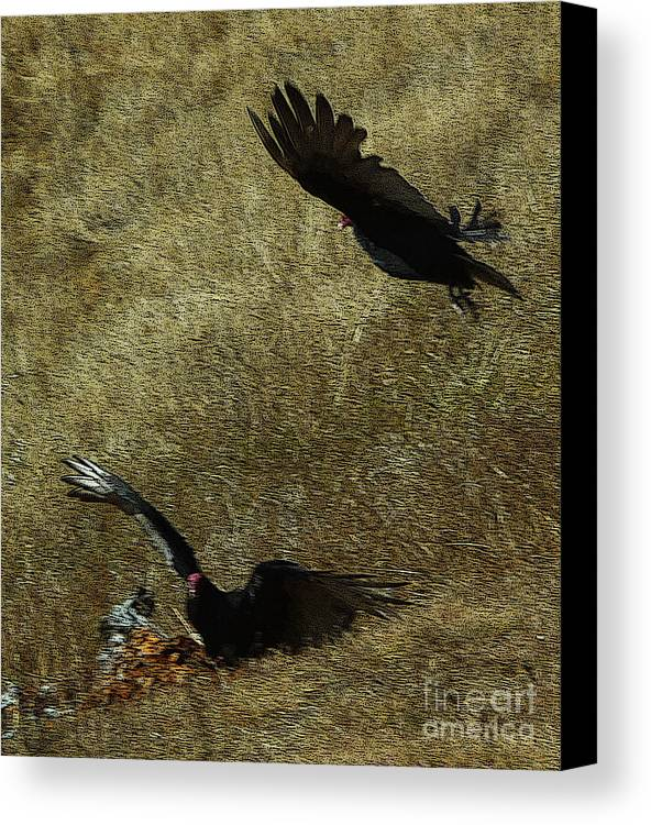 Turkey Vultures Canvas Print featuring the photograph Wings Spread Wide by JoAnn SkyWatcher