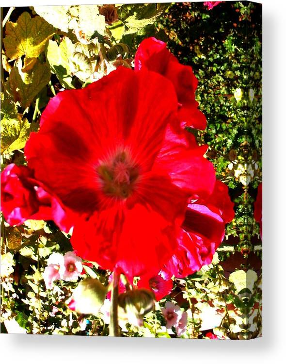 Flowers Canvas Print featuring the photograph Red 1 by Cj Carroll