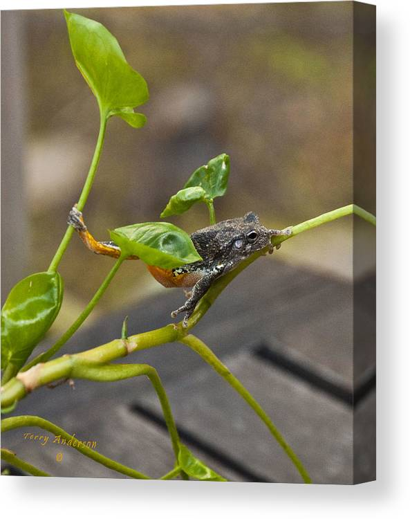 Hangin' Out Canvas Print featuring the photograph Hangin' Out by Terry Anderson