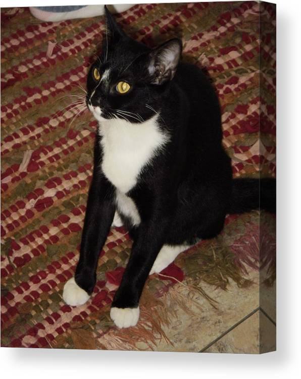 Pet House Cat Canvas Print featuring the photograph Nosey II by Edward Wolverton
