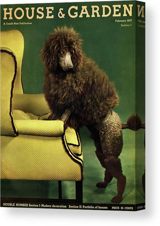 Illustration Canvas Print featuring the photograph A House And Garden Cover Of A Poodle by Anton Bruehl
