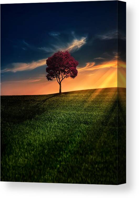 Agriculture Canvas Print featuring the photograph Awesome Solitude by Bess Hamiti