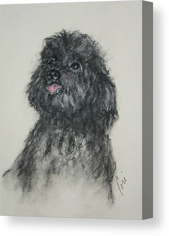 Poodle Canvas Print featuring the drawing Gigi by Cori Solomon