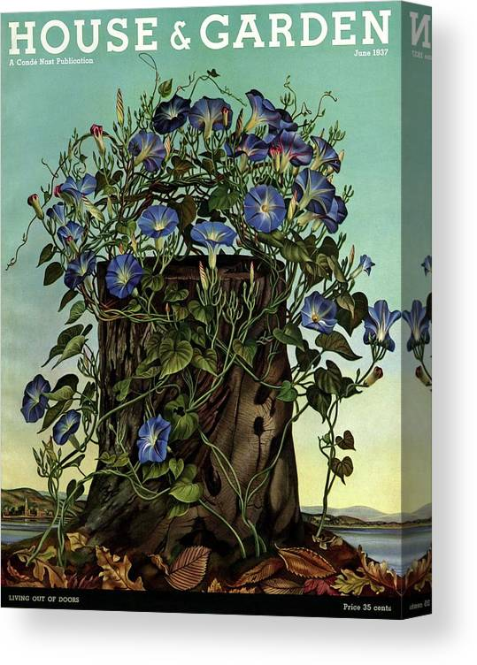 House And Garden Canvas Print featuring the photograph House And Garden Cover Featuring Flowers Growing by Audrey Buller