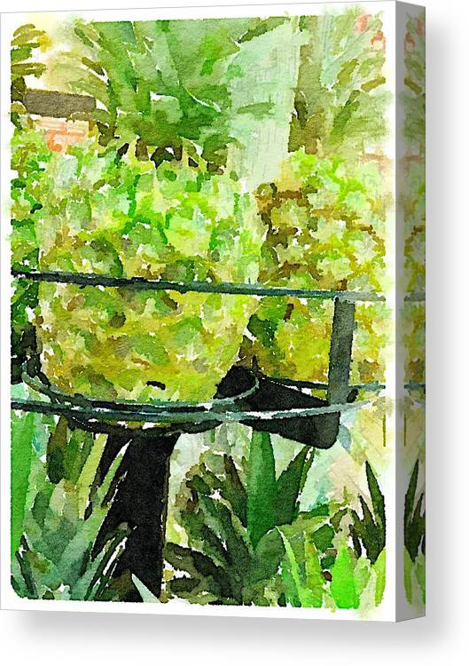 Waterlogue Canvas Print featuring the digital art Pineapple Green by Shannon Grissom