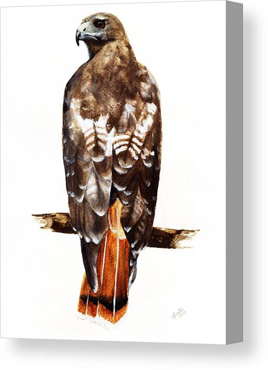 Red Tailed Hawk Canvas Print featuring the painting Red Tailed Hawk by Carlo Ghirardelli