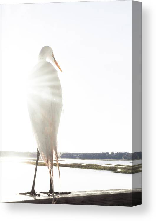 Standing Water Canvas Print featuring the photograph Sun Perch by Copyright Dan Smith