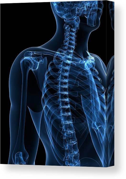 Vertical Canvas Print featuring the digital art Upper Body Bones, Artwork by Sciepro