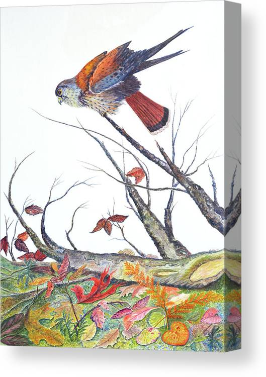 Bird Canvas Print featuring the painting American Kestrel by Ben Kiger
