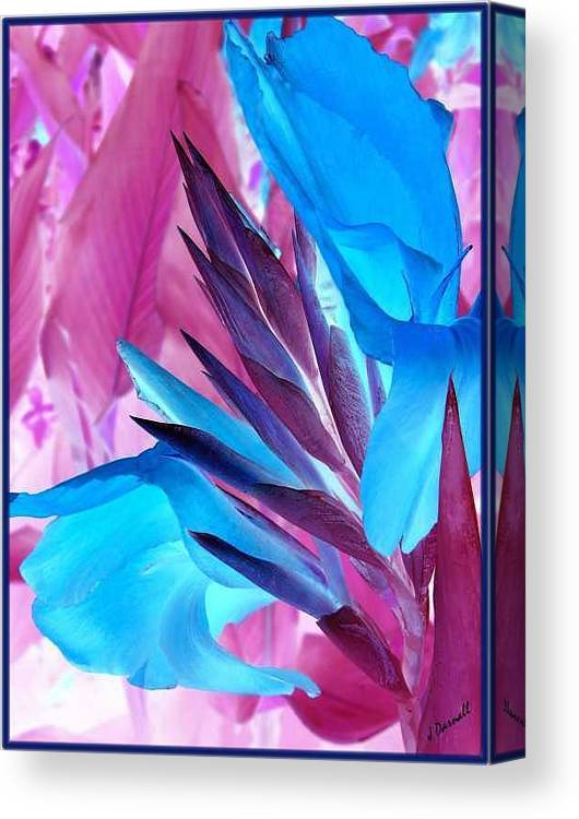 Flower Canvas Print featuring the photograph Bird of Paradise by Jim Darnall