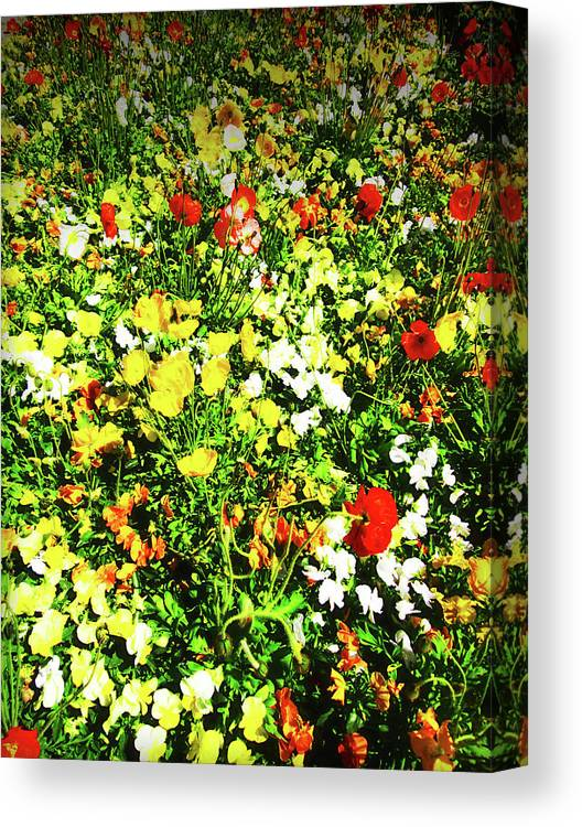 Flowers Canvas Print featuring the photograph Colorful by Douglas Barnard