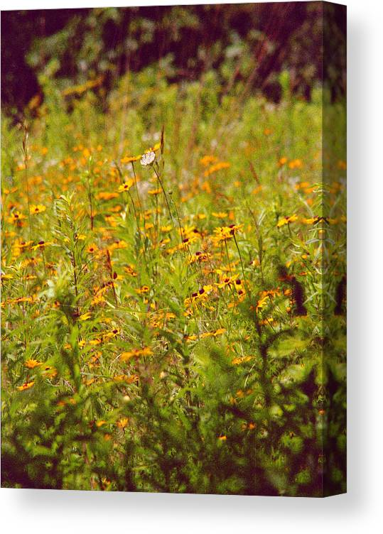 Flower Canvas Print featuring the photograph Queen Ann by Randy Oberg
