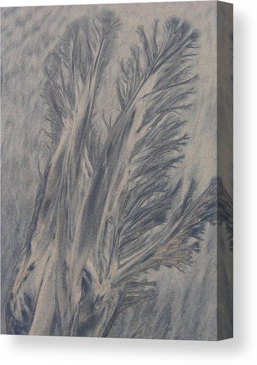 Sand Canvas Print featuring the photograph Sand Drawing 1 by Kevin Callahan